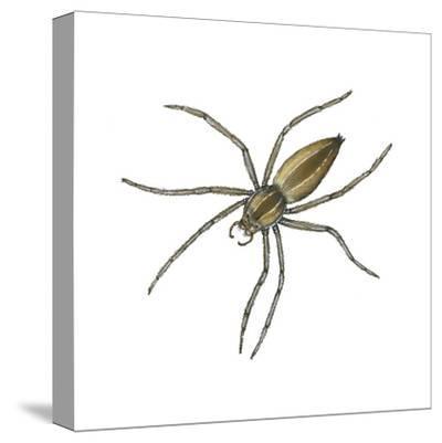 Nursery Web Spider (Pisaurina Mira), Arachnids-Encyclopaedia Britannica-Stretched Canvas Print