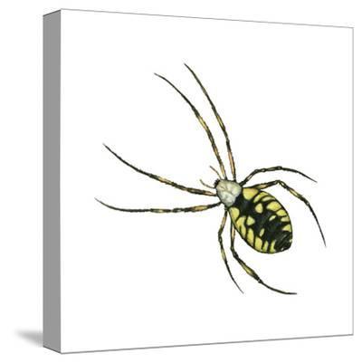 Golden Garden Spider (Argiope Aurantia), Arachnids-Encyclopaedia Britannica-Stretched Canvas Print