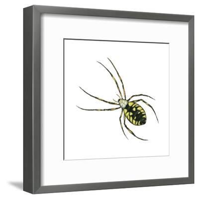 Golden Garden Spider (Argiope Aurantia), Arachnids-Encyclopaedia Britannica-Framed Art Print