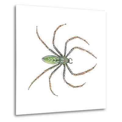 Green Lynx Spider (Peucetia Viridans), Arachnids-Encyclopaedia Britannica-Metal Print