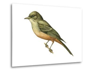Say's Phoebe (Sayornis Saya), Birds-Encyclopaedia Britannica-Metal Print