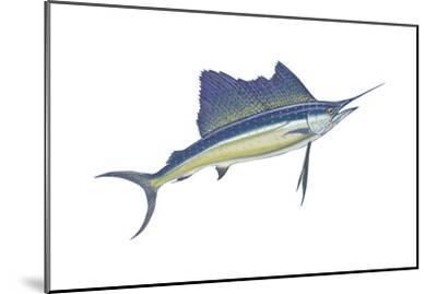 Atlantic Sailfish (Istiophorus Platypterus), Fishes-Encyclopaedia Britannica-Mounted Art Print