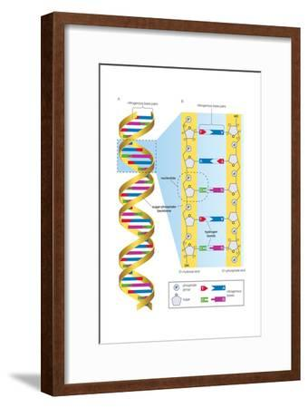 Structure of Dna Molecule. Heredity, Genetics-Encyclopaedia Britannica-Framed Art Print