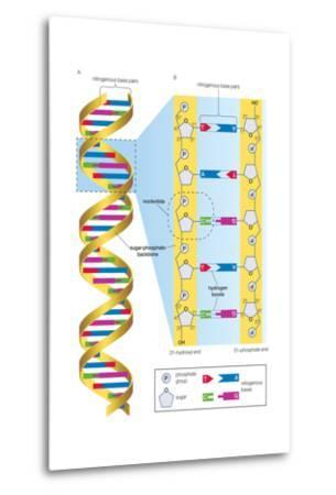 Structure of Dna Molecule. Heredity, Genetics-Encyclopaedia Britannica-Metal Print