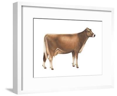 Brown Swiss Cow, Dairy Cattle, Mammals-Encyclopaedia Britannica-Framed Art Print