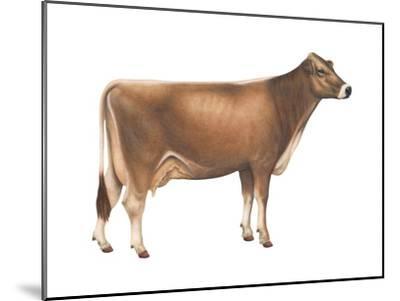 Brown Swiss Cow, Dairy Cattle, Mammals-Encyclopaedia Britannica-Mounted Art Print
