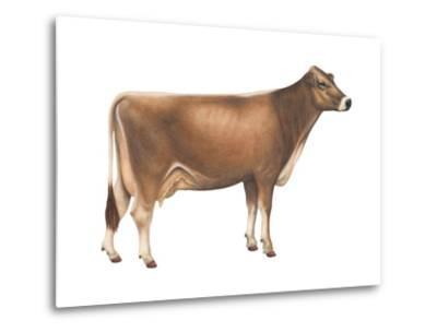 Brown Swiss Cow, Dairy Cattle, Mammals-Encyclopaedia Britannica-Metal Print