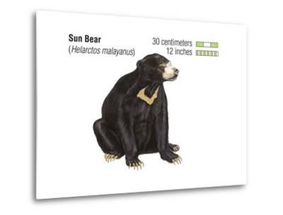 Sun Bear (Helarctos Malayanus), Mammals-Encyclopaedia Britannica-Metal Print