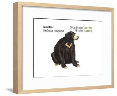 Sun Bear (Helarctos Malayanus), Mammals-Encyclopaedia Britannica-Framed Art Print
