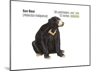 Sun Bear (Helarctos Malayanus), Mammals-Encyclopaedia Britannica-Mounted Art Print