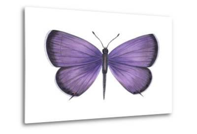 Eastern Tailed Blue Butterfly (Everes Comyntas), Insects-Encyclopaedia Britannica-Metal Print