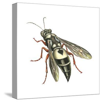 Bushnell's Wasp, Insects-Encyclopaedia Britannica-Stretched Canvas Print