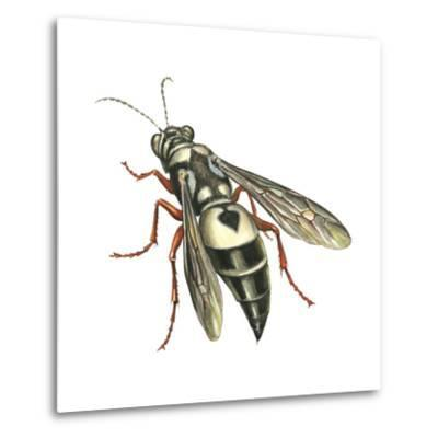 Bushnell's Wasp, Insects-Encyclopaedia Britannica-Metal Print