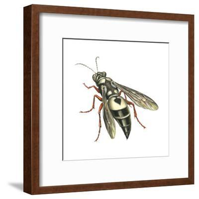 Bushnell's Wasp, Insects-Encyclopaedia Britannica-Framed Art Print