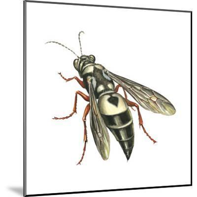 Bushnell's Wasp, Insects-Encyclopaedia Britannica-Mounted Art Print