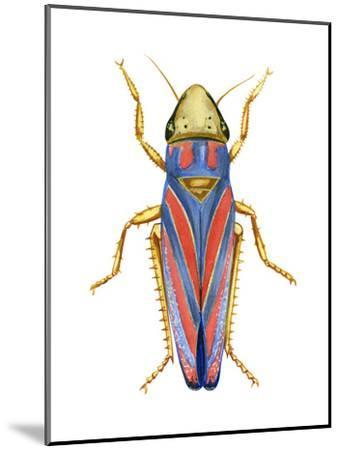 Red-Banded Leafhopper (Graphocephala Coccinea), Insects-Encyclopaedia Britannica-Mounted Art Print