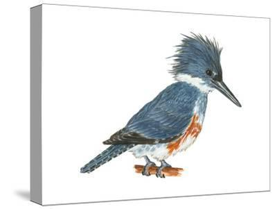 Kingfisher (Megaceryle Alcyon), Birds-Encyclopaedia Britannica-Stretched Canvas Print