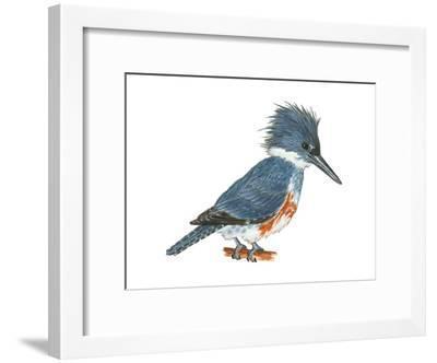 Kingfisher (Megaceryle Alcyon), Birds-Encyclopaedia Britannica-Framed Art Print