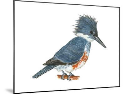Kingfisher (Megaceryle Alcyon), Birds-Encyclopaedia Britannica-Mounted Art Print