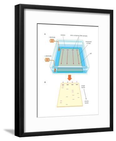 Gel Electrophoresis Uses an Electric Field-Encyclopaedia Britannica-Framed Art Print