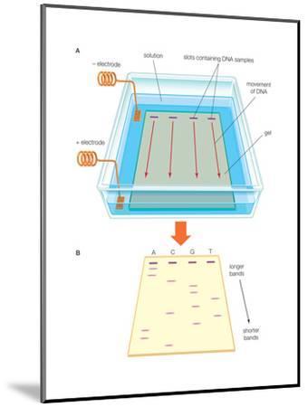 Gel Electrophoresis Uses an Electric Field-Encyclopaedia Britannica-Mounted Art Print