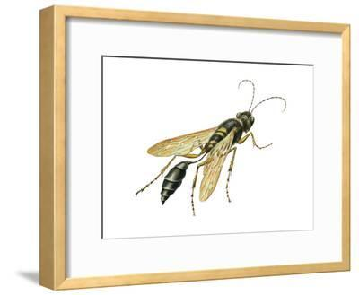 Mud Dauber (Crabronidae), Wasp, Insects-Encyclopaedia Britannica-Framed Art Print