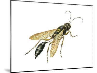 Mud Dauber (Crabronidae), Wasp, Insects-Encyclopaedia Britannica-Mounted Art Print