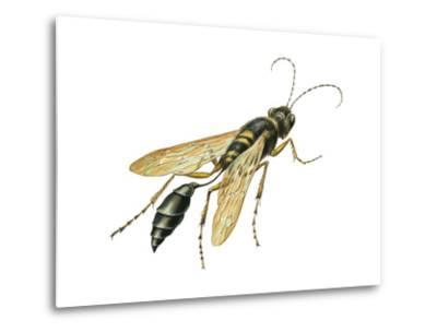 Mud Dauber (Crabronidae), Wasp, Insects-Encyclopaedia Britannica-Metal Print