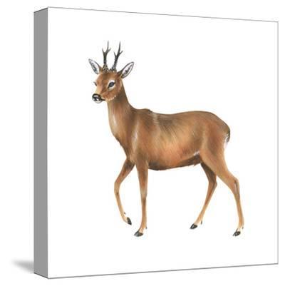 Roe Deer (Capreolus), Mammals-Encyclopaedia Britannica-Stretched Canvas Print