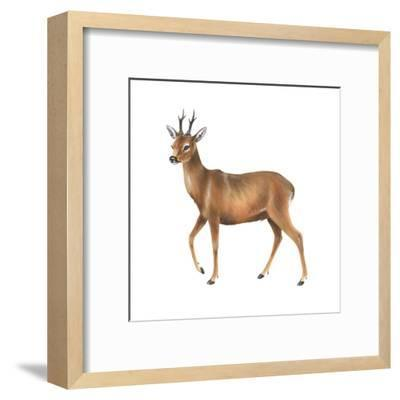 Roe Deer (Capreolus), Mammals-Encyclopaedia Britannica-Framed Art Print
