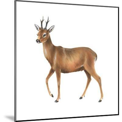 Roe Deer (Capreolus), Mammals-Encyclopaedia Britannica-Mounted Art Print