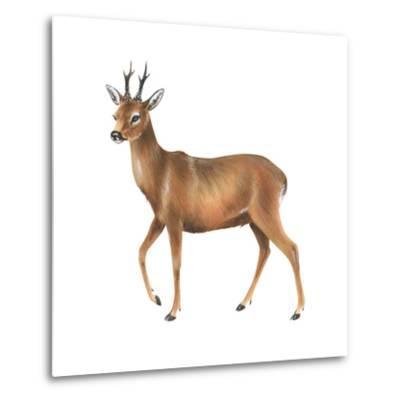 Roe Deer (Capreolus), Mammals-Encyclopaedia Britannica-Metal Print