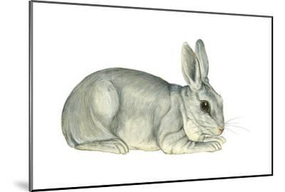 Domestic Rabbit (Oryctolagus Cuniculus), Mammals-Encyclopaedia Britannica-Mounted Art Print