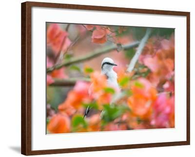 A Masked Water Tyrant Perches on a Tree Branch in the Atlantic Rainforest-Alex Saberi-Framed Photographic Print