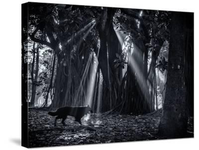 Early Morning Mist and Trees in Sao Paulo's Ibirapuera Park-Alex Saberi-Stretched Canvas Print
