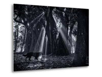 Early Morning Mist and Trees in Sao Paulo's Ibirapuera Park-Alex Saberi-Metal Print
