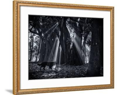 Early Morning Mist and Trees in Sao Paulo's Ibirapuera Park-Alex Saberi-Framed Photographic Print