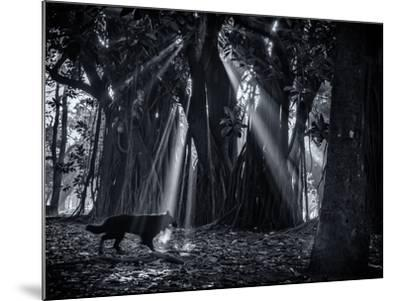Early Morning Mist and Trees in Sao Paulo's Ibirapuera Park-Alex Saberi-Mounted Photographic Print
