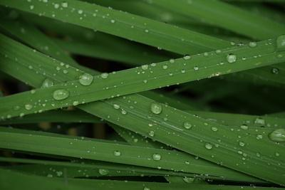 Raindrops on Grass Blades after a Storm-Amy & Al White & Petteway-Framed Photographic Print