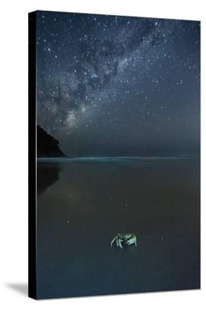 The Milky Way Above a Crab on a Beach-Alex Saberi-Stretched Canvas Print