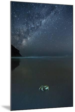 The Milky Way Above a Crab on a Beach-Alex Saberi-Mounted Photographic Print