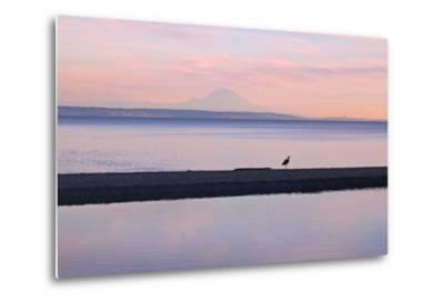 Great Blue Heron, Ardea Herodias, Near Mount Rainier in Seattle-Donna O'Meara-Metal Print