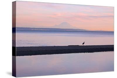 Great Blue Heron, Ardea Herodias, Near Mount Rainier in Seattle-Donna O'Meara-Stretched Canvas Print