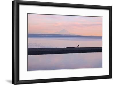 Great Blue Heron, Ardea Herodias, Near Mount Rainier in Seattle-Donna O'Meara-Framed Photographic Print