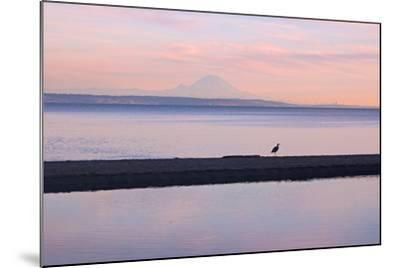 Great Blue Heron, Ardea Herodias, Near Mount Rainier in Seattle-Donna O'Meara-Mounted Photographic Print