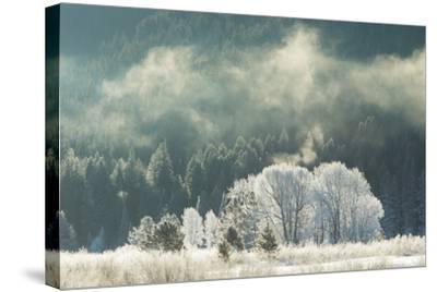 Frost Covered Trees in Grand Teton National Park-Charlie James-Stretched Canvas Print