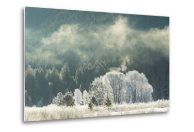 Frost Covered Trees in Grand Teton National Park-Charlie James-Metal Print