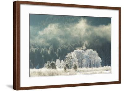 Frost Covered Trees in Grand Teton National Park-Charlie James-Framed Photographic Print