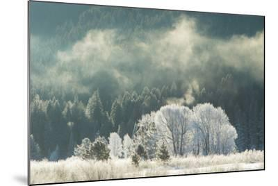 Frost Covered Trees in Grand Teton National Park-Charlie James-Mounted Photographic Print