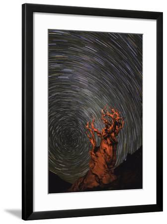 Long Exposure of Star Trails Above a Bristlecone Pine Tree in California, Usa-Babak Tafreshi-Framed Photographic Print